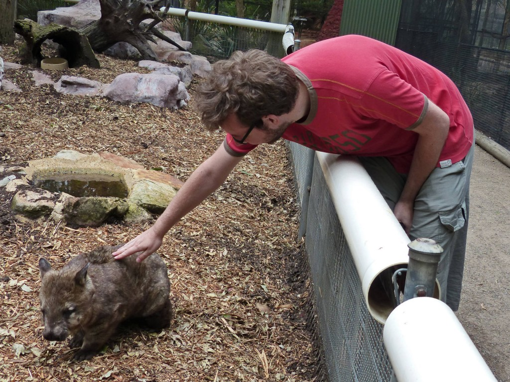 robert-wombat-featherdale-wildlife-park