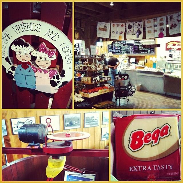Besuch der BEGA Cheese Factory