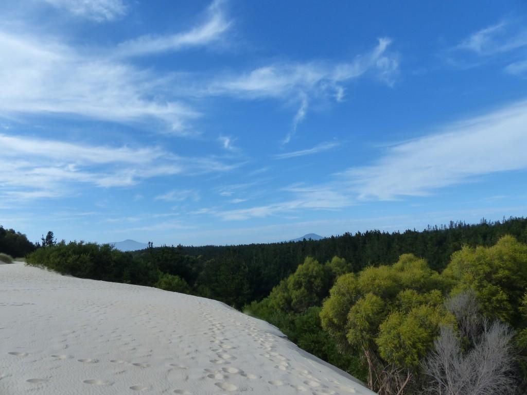 Henty Dunes - Sandberg mit Blick über die Bäume