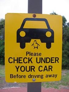 """Schild beim Parkplatz vor der Penguin Parade """"Please Check under your Car"""" - keine Pinguine unterm Auto?"""