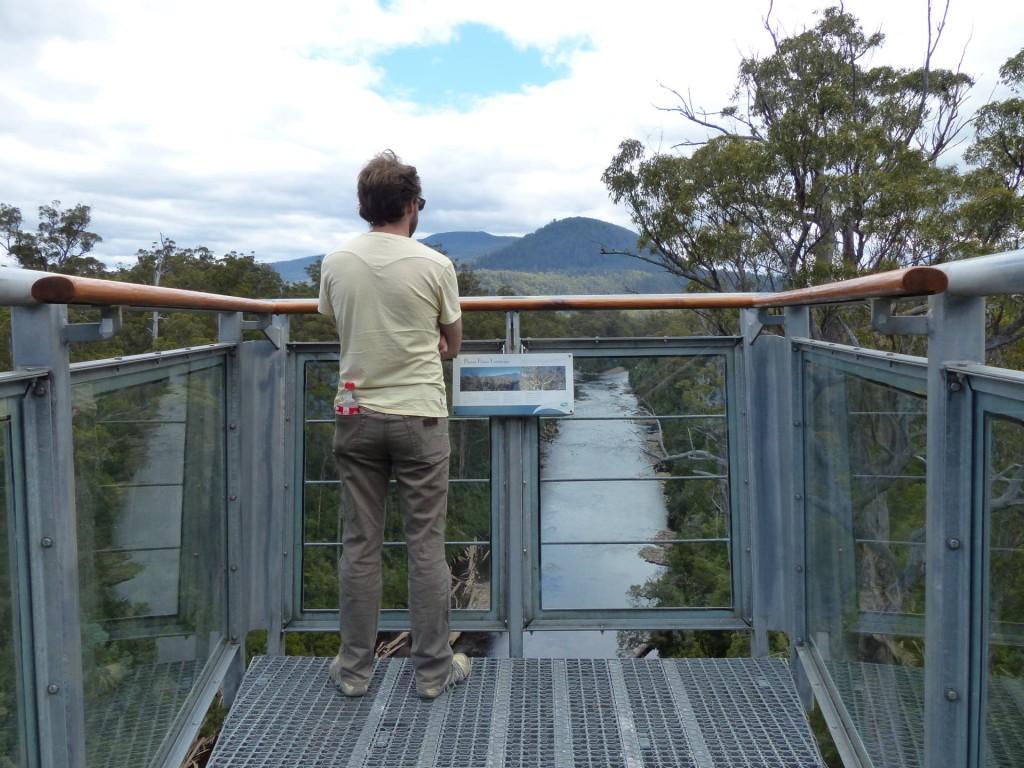 Robert auf der Aussichtsplatform des Tahune AirWalk