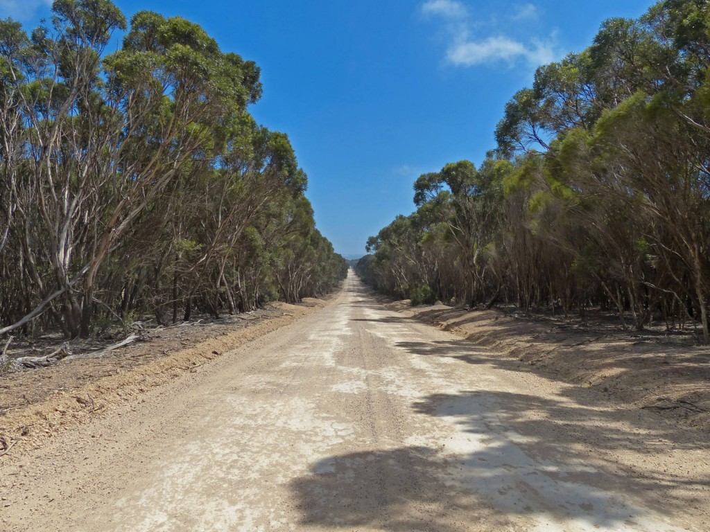 typische Gravel Roadauf Kangaroo Island